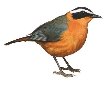 Foder til vildtfugle