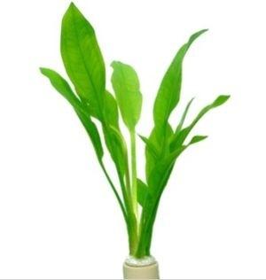 TROPICAbundtplanter5stk-31