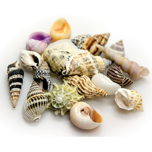HOBBY Sea Shells set (AT40224)-01