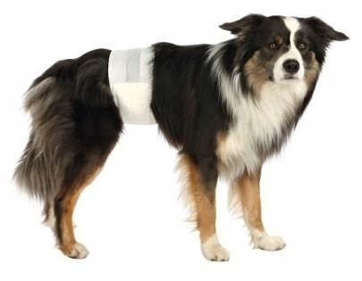 BleTilHanhundStrSM3046cm12stk-01
