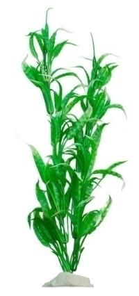 EVOPlastplanteHygrophilavarglabra-31