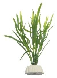EVOPlastplanteEleocharisspyellow10cm-31
