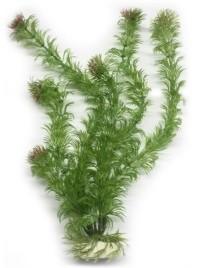 EVOPlastplanteEgeriadensaca-31