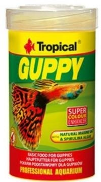 TROPICAL Guppy (S-068)-31
