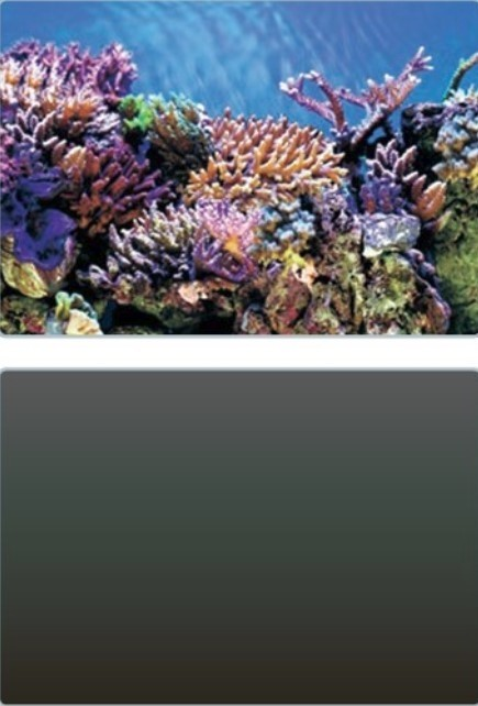 SUPERFISH Deco Poster A-32
