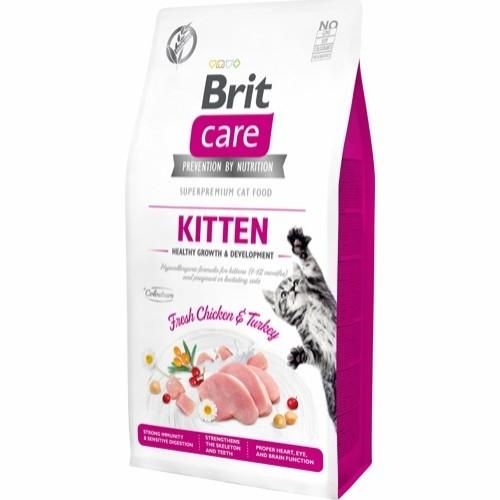 BritCareKitten-31