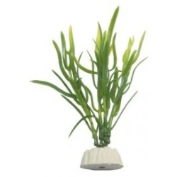 EVO Plastplante, Eleocharis sp.yellow, 10 cm-20