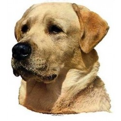 Labrador Retriever, gul-20