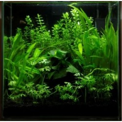 TROPICA Layout-20