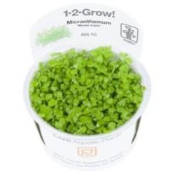 "TROPICA 1-2 GROW Micranthemum ""Monte Carlo"" (025 TC)"