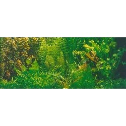 TROPICA Akvarieplanter assorterede 4 stk