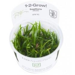 TROPICA 1-2 GROW Sagittaria subulata 1-2-Grow 1 bg (079 TC)