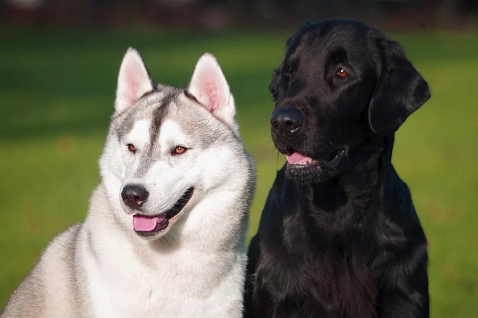hunde_1